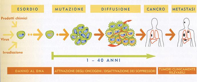 L'evoluzione del cancro (tratto da L'alimentazione anti-cancro, di Richard Béliveau, Denis Gingras, Sperling & Kupfer Editori)